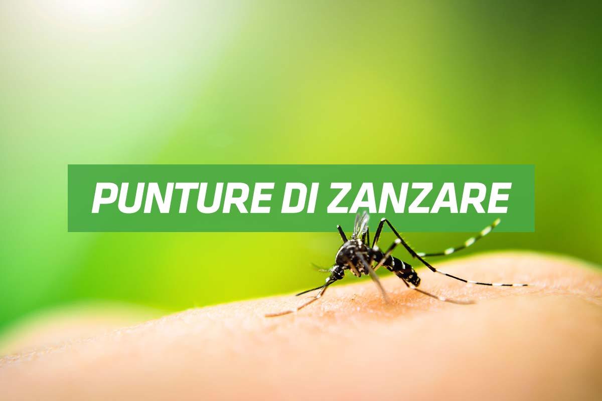 rimedi contro le punture di zanzare
